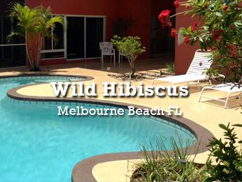 Wild Hibiscus - Melbourne Beach, Florida